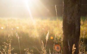 Summer golden hour sun set