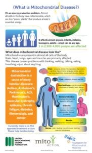 graphic explaining what mitochondrial disease is, details included in text below