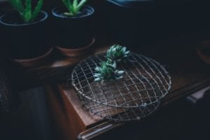 succulents on a metal mesh cover